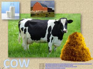 Image Cow